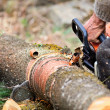 Lumberjack cutting a tree trunk with chainsaw - Stock Photo