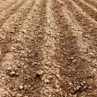 Ploughed land — Stock Photo