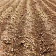 Ploughed land - Stock Photo
