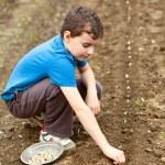 Cute kid planting garlic — Stock Photo #5473398
