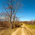 Rural empty road — Stock Photo #5473480