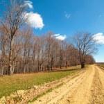 Rural empty road — Stock Photo #5473500