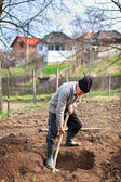 Old farmer digging in the garden — Stock Photo