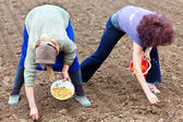 Women planting shallot (young onions) — Stock Photo