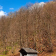 Countryside landscape with wooden shack and forest — Stok fotoğraf