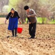 Stock Photo: Senior couple planting on their land