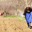 Senior woman farmer sowing - Stock Photo