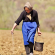 Stock Photo: Senior woman farmer sowing