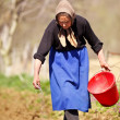 Senior woman farmer sowing — Stock Photo