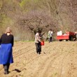 Family of farmers sowing on their land — Stock Photo