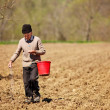Stock Photo: Senior farmer sowing seeds from bucket