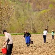 Family of farmers sowing their land — Stock Photo