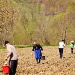 famille d'agriculteurs de semer leurs terres — Photo