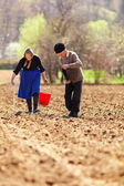 Senior couple planting on their land — Stock Photo