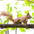 Royalty-Free Stock Photo: Squirrel on a tree