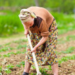 Old rural woman working the land - Stock Photo