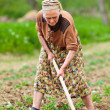 Old rural woman working the land — Stock Photo