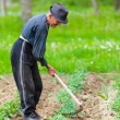 Old farmer working the land — Stock Photo