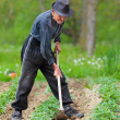 Stock Photo: Old farmer working land