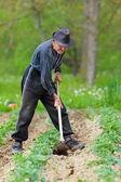 老农民在土地上耕耘 — 图库照片