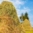 Hay stacks — Stock Photo
