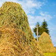 Hay stacks — Stock Photo #5702869