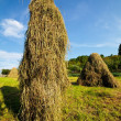 Hay stacks - Stock Photo