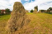 Hay stacks — Stock Photo