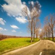 Empty road between trees - Stockfoto