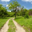 Stock Photo: Landscape with empty road through forest
