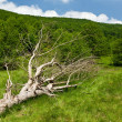 Fallen tree on a meadow - Stock Photo