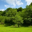 Landscape with forest under blue sky - Foto de Stock