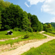 Landscape with empty road through forest — Stock Photo