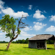 Wooden cabin and tree - Stock Photo