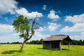 Wooden cabin and tree — Stock Photo