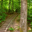 Stairs through forest - Lizenzfreies Foto