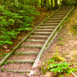 Stairs through forest — Stock Photo