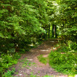 Enchanted forest — Stock Photo #5859652