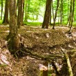 Enchanted forest — Stock Photo #5859666