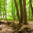 Enchanted forest — Stock Photo #5859669