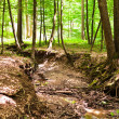 Enchanted forest — Stock Photo #5859670