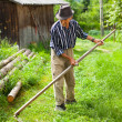 Old rural man using scythe — Stock Photo #5859697
