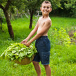 Boy with a basket of lettuce — Stock Photo