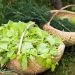 Basket with lettuce in grass - Stock Photo
