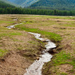 Creek in Romania mountains — Stock Photo #5903431