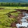 Stock Photo: Creek in Romania mountains