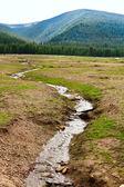 Creek w górach Rumunii — Zdjęcie stockowe