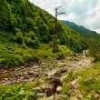 Latoritei Valley in Romania mountains — Stock Photo #5955405