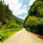 Latoritei Valley in Romania — Stock Photo #5960258