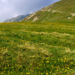 Stock Photo: Meadow under Iezer peak of Parang mountains in Romania